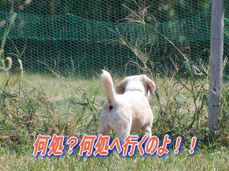 2010・09・19芋掘り12