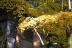 2010・11・20円教寺もみじ3