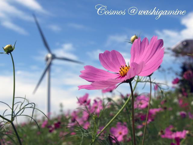 09-9-14-cosmos4.jpg