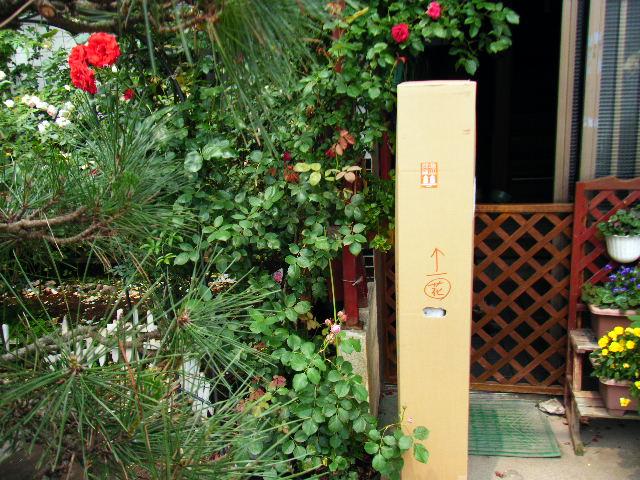 村田さんよりバラが届きました。