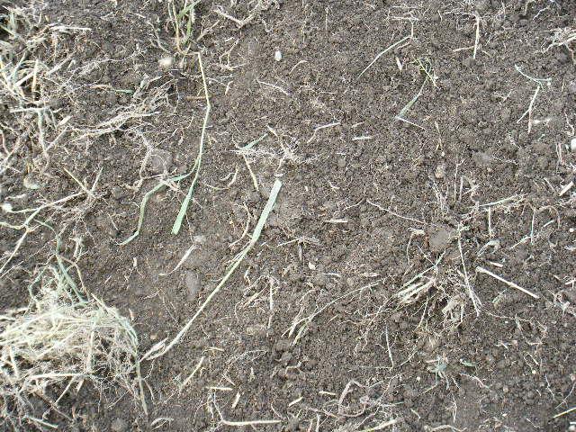 やはりいい土でした。
