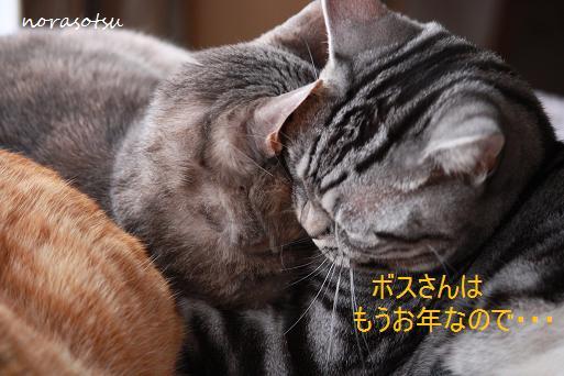 004_20091130084158.jpg