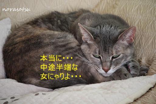 005_20091107211324.jpg