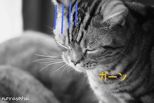 011_20091130084156.jpg
