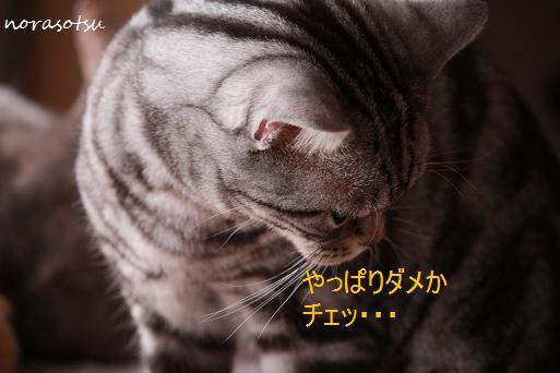 012_20091130091940.jpg