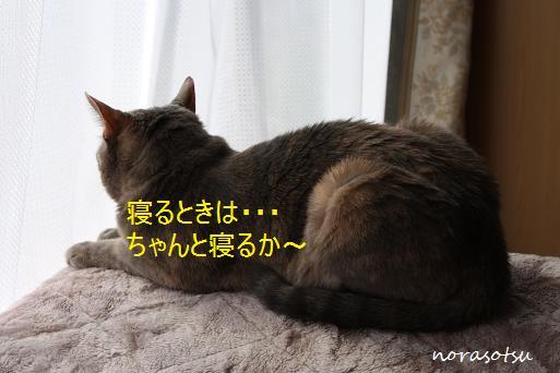 016_20091107211324.jpg
