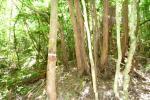 s7bunki_20110625223125.jpg