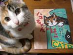 ハコちゃん本と猫