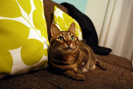 ネコもお気に入りのソファ