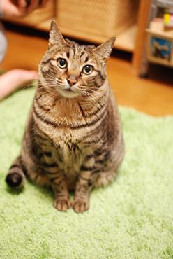 年賀状用素材 猫のまーくん