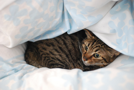 布団の中で猫団子