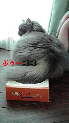 2009101709010001_20091114020932.jpg