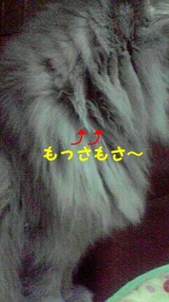 2009111221010000.jpg