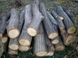 シイタケのほだ木