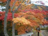 城峯公園紅葉ベスト