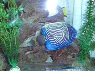 ウズキン200904