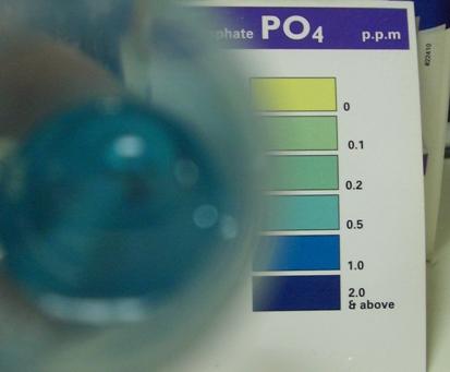 リン酸塩サブ20100105