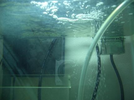 鉄釘サブ水面20100108