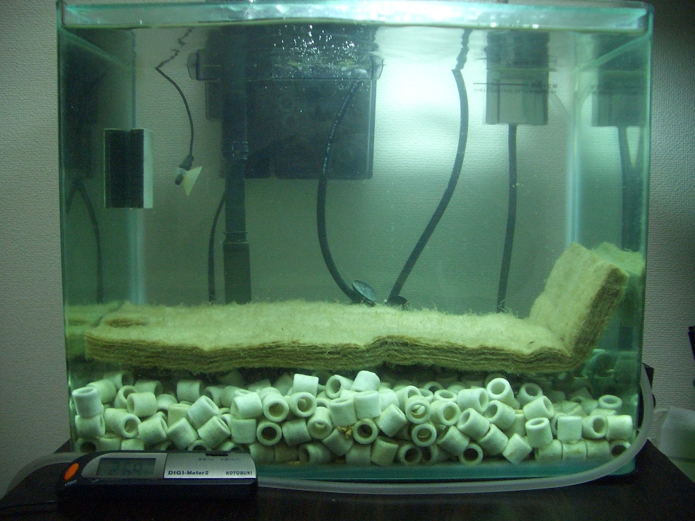 水槽20100116_2000