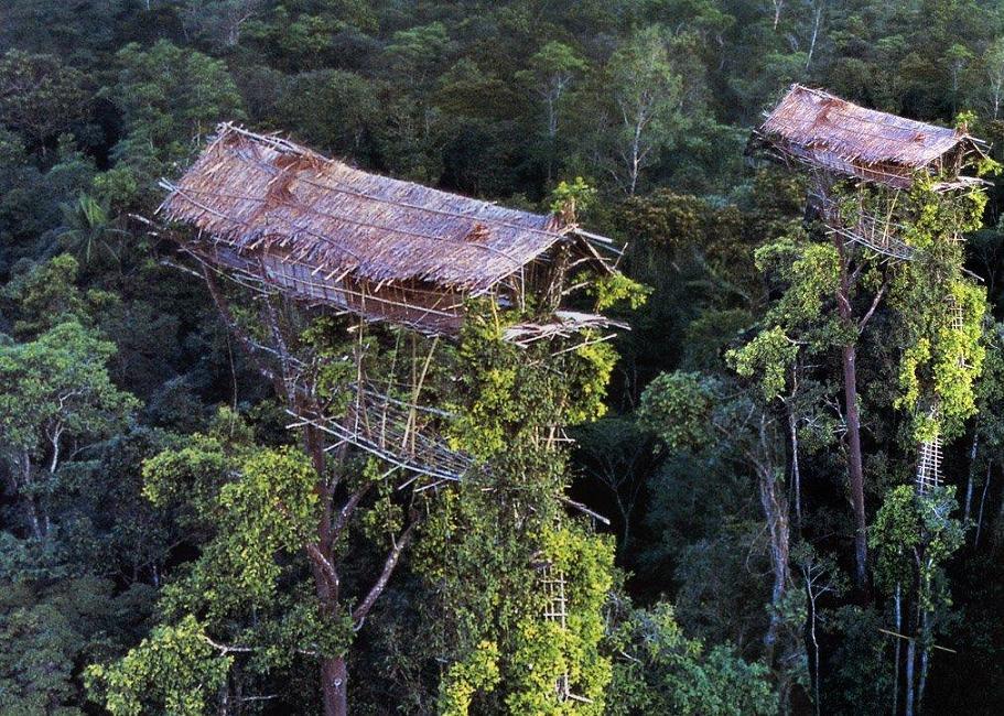 木の上のお家