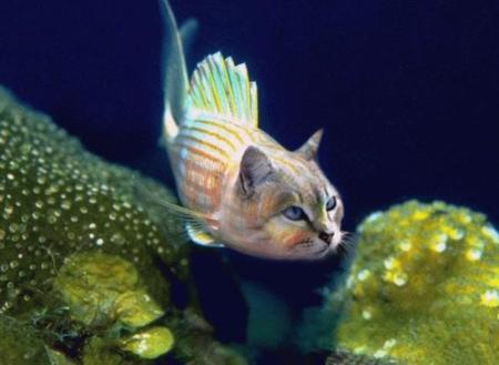 a061001catfish.jpg