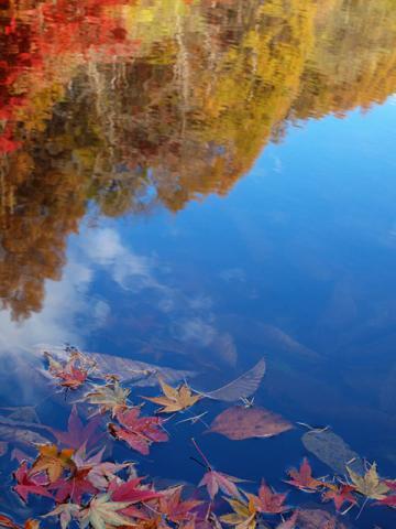 トンボ池落葉