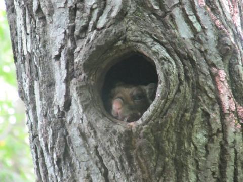 自然巣ムササビ