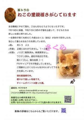 さくらポスター2_convert_20091014134028