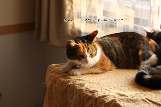 IMG_3186-2.jpg