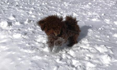 Luke in the Snow