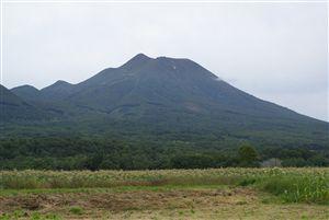 嶽キミ収穫