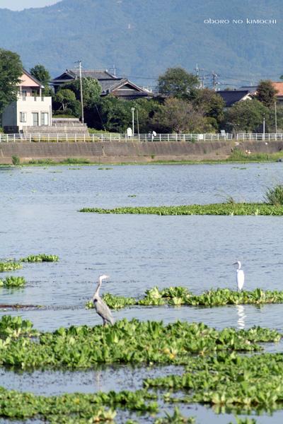 2009 10月11日 江津湖 017