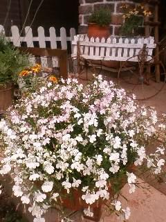 2011.0601庭の花①