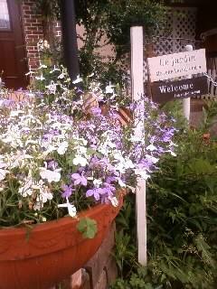 2011.0601庭の花③
