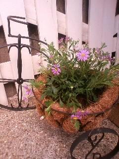 2011.0601庭の花④