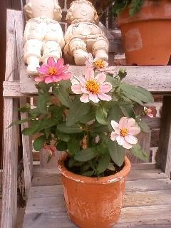 2011.0601庭の花⑤