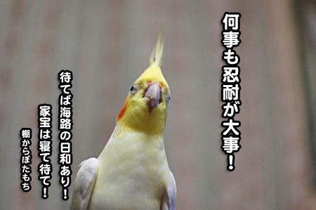 たこ焼きデー-09