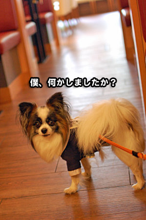 うしすけ鷺沼店-12