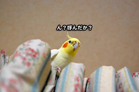抜け毛ストラップ-05