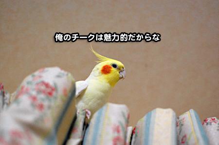 抜け毛ストラップ-06