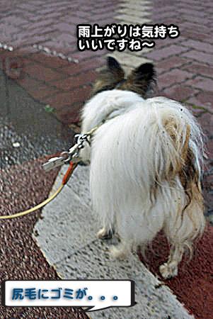 雨上がりの散歩-04