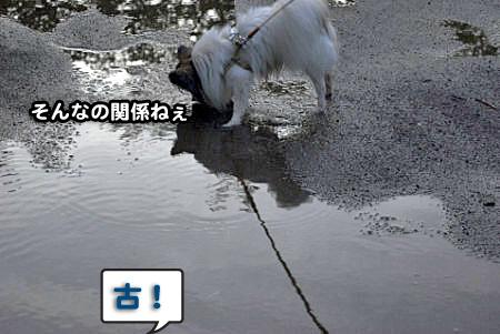 雨上がりの散歩-03