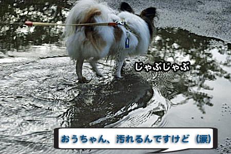 雨上がりの散歩-02