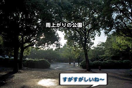 雨上がりの散歩-01