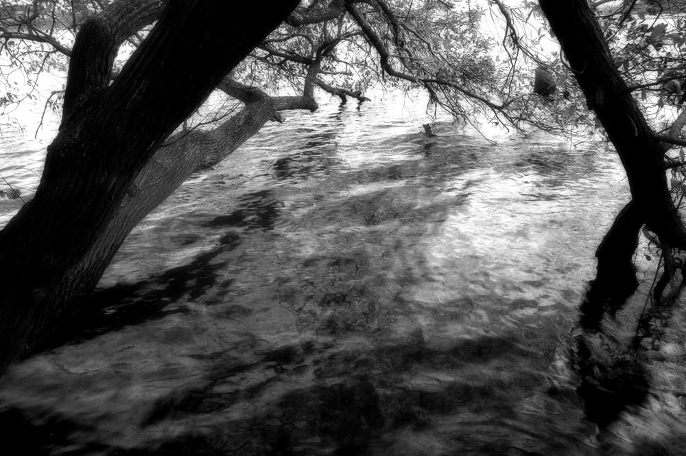 水の中の木