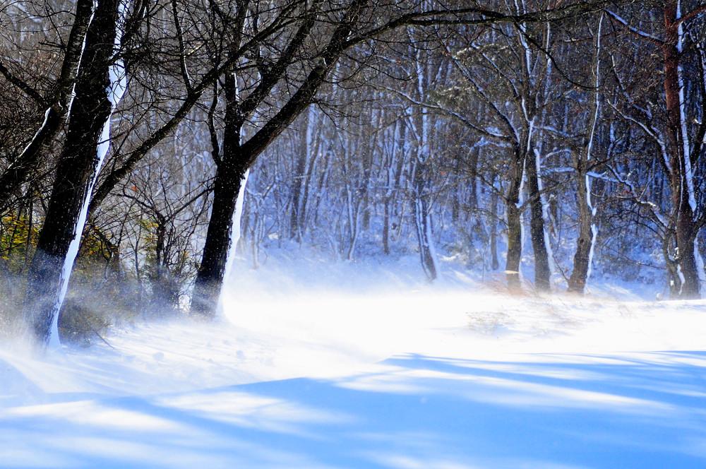 吹雪の散歩道