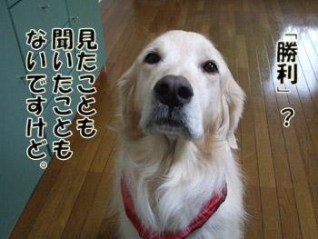 2010_01270049.jpg
