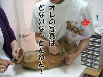 2010_04040108.jpg