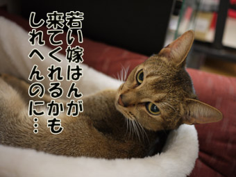 2011_01180004no2のコピー