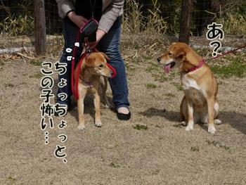 2011_03120052のコピーz
